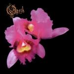 Обложка альбома Orchid