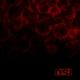 Обложка альбома Blood